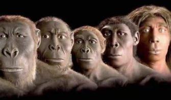 yeni-mufredatla-birlikte-darwin-in-evrim-teorisi-lise-mufredatindan-kaldirildi